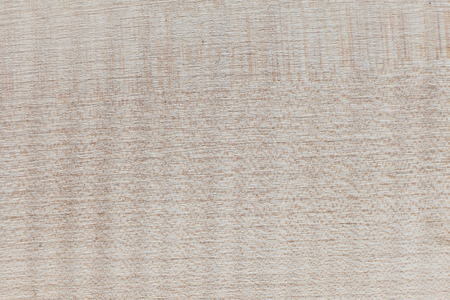 acer saccharum: wood texture background - Maple - Acer saccharum