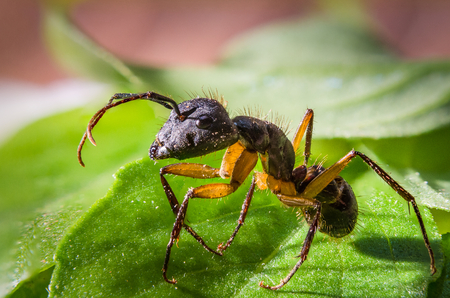Closeup of an ant on leaves