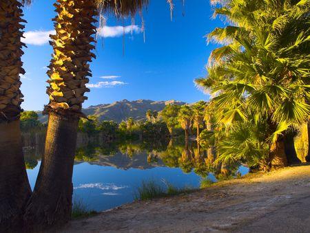 springs: palm