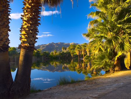 palm desert: palma