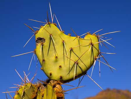 beaver tail: cactus