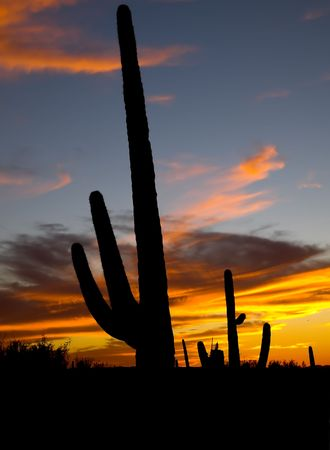 tucson: sunset