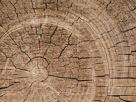 woodgrain: Structure of an old cut on a pine