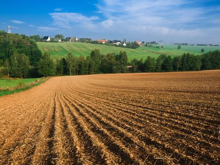 Gold land photo