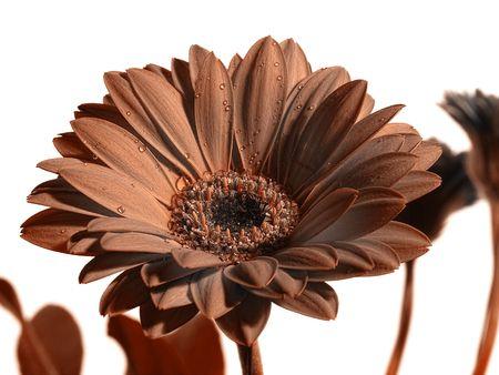 Flower Stock Photo - 2779754