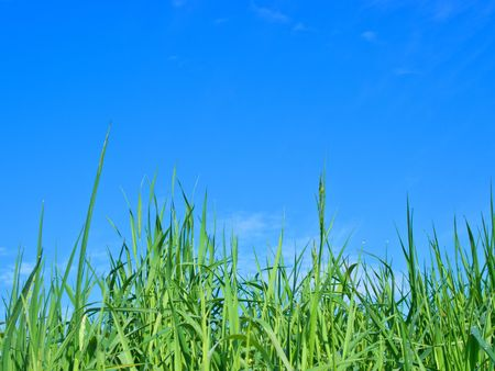 Grass Stock Photo - 2983035