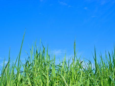 Grass Stock Photo - 2983035