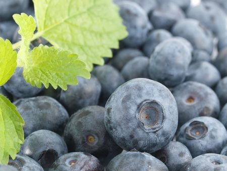 leaflets: Blueberry with green leaflets Stock Photo