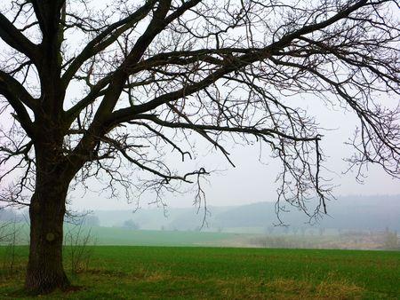 siloette: Tree siloette on foggy day Stock Photo