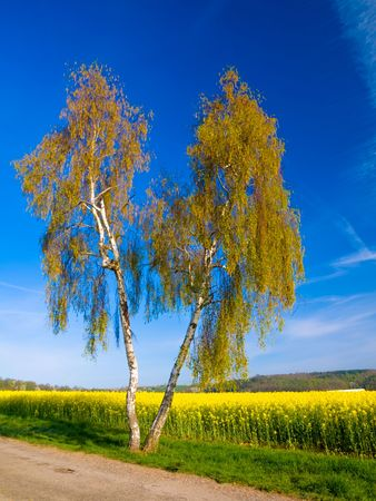 Tree and Yellow field Stock Photo - 4850205