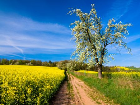 Tree and Yellow field Stock Photo - 4850210