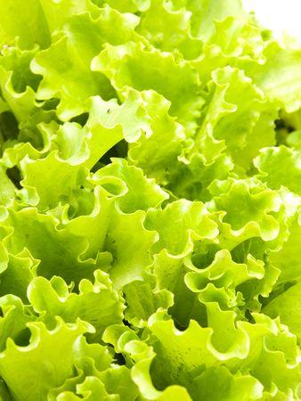 vibrat color: Lettuce  Stock Photo