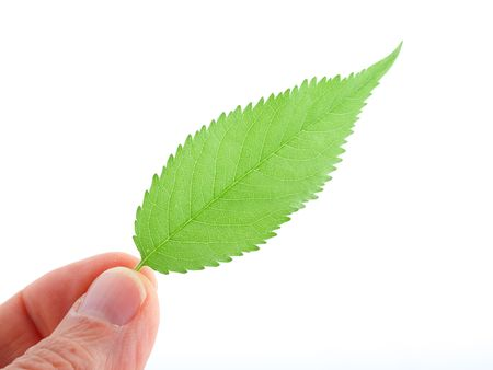 Green leaf on human hand photo