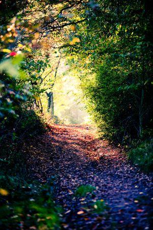 sendero en el bosque de la caída y la luz al final de un túnel  Foto de archivo