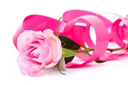 Flor de una rosa con una cinta Rosa