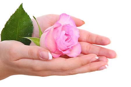 Rose flower in girl hand