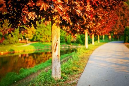 Acer platanoides Faassens Black photo