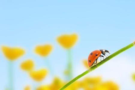 Ladybug and spring flower background Stock Photo - 9731810