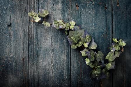 Fake ivy on wooden plank peeling paint Stock Photo - 10181930