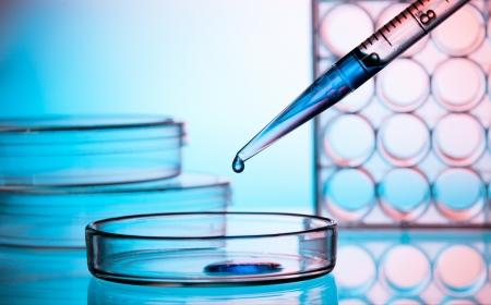 Pipette Zugabe von Flüssigkeit zu einem der Petrischale