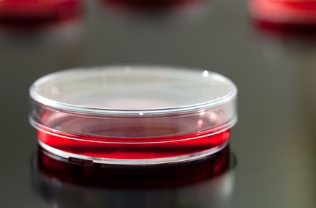 Petri dishes used for eukaryotic cell culture in  solid agar. Stock Photo - 10615657