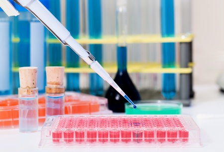 biochemical: laboratory micro pipette enters the biological solution in a PCR tube