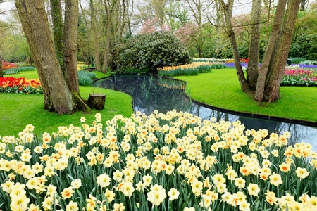 daffodil: Flower garden with river and pond