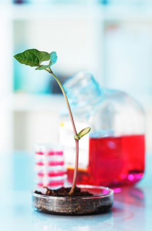 additives: Development of additives to accelerate the growth of plants