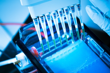 dna laboratory: loading amplified DNA samples to agarose gel with multichannel pipette Stock Photo