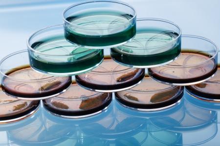 pathogenic: Petri dish with colonies of pathogenic bacteria