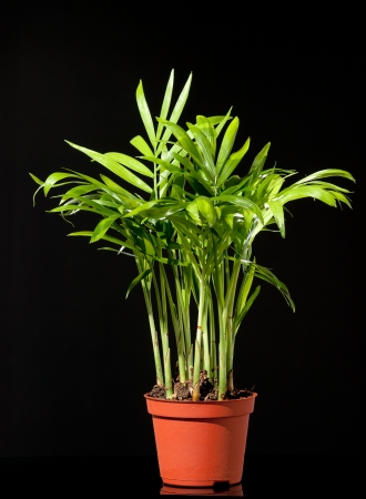 Bamboo hausolant in flowerpot photo
