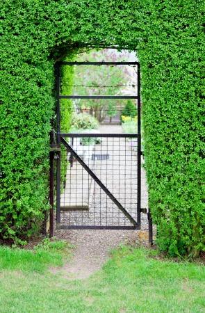 wicket door: Wicket door in the green garden