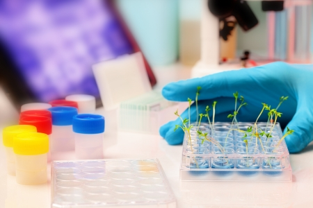 genetic research: GMO crop plants in the laboratory of genetic research Stock Photo