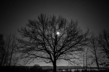 lonely tree and a star in the sky photo