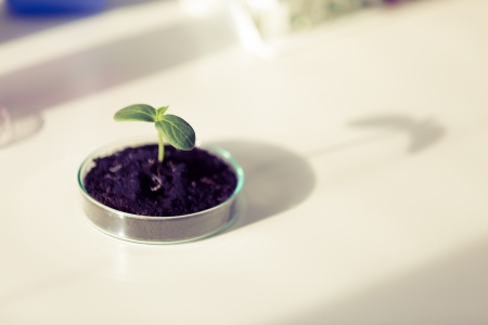 germinate: Biotechnology - Plant culture