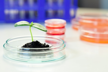 food research: Biotechnology - Plant culture