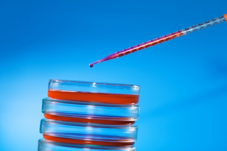 pipette and petri dish photo