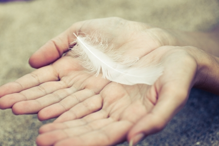 falling feather: a feather in hands