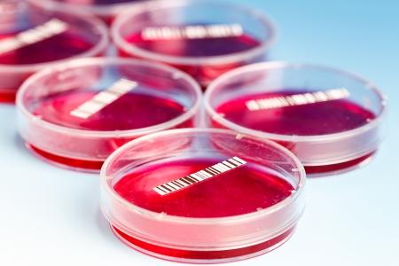 assay: petri dish with blood samples