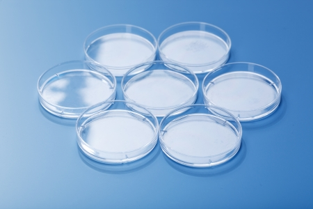 petri dishes photo
