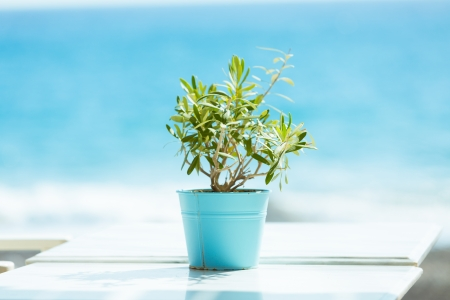 plant in a pot on a turquoise sea background photo
