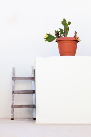 cactus with white walls and stairs photo