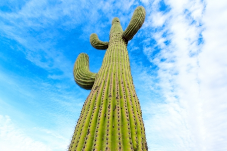 cactus on the sky background Stock Photo