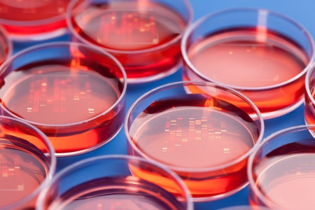 sequencing: Petri dishes with samples for DNA sequencing