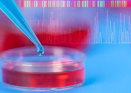 micropipette: petri dishes and micropipette, pathogens test