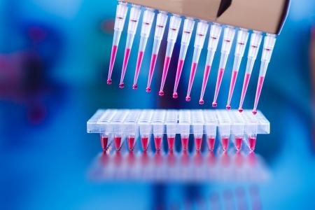 multi pipette in microbiology laboratory photo