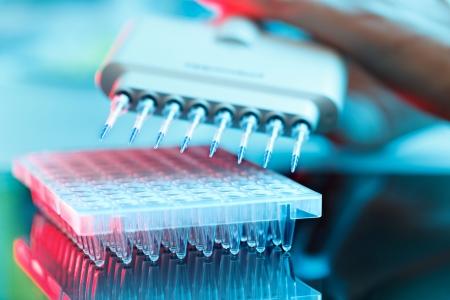 pipeta: múltiples pipeta en el laboratorio de microbiología Foto de archivo