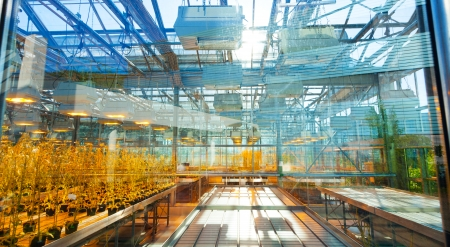 scientific farming: Agricultural plants in a greenhouse, the scientific selection of GMOs Stock Photo