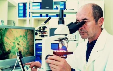 biopsia: cient�fico examina muestras de biopsia