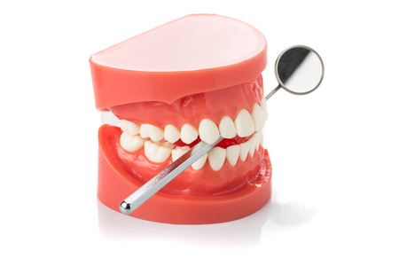 dental jaw model with dental mirror photo